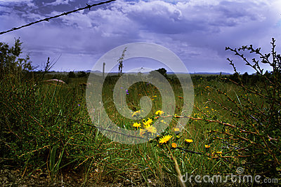 Yellow flowers along a barbed wire fence with a stormy sky above