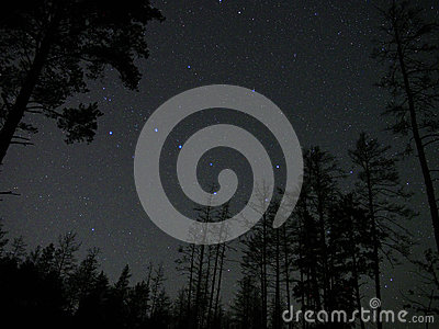Night sky stars big dipper constellation forest atmosphere