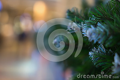 Green needles on spruce, fir, pine branches. Abstract blurred holiday background with Bokeh. Selective focus. Winter