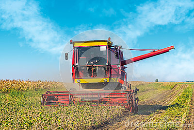 Soybean harvesting