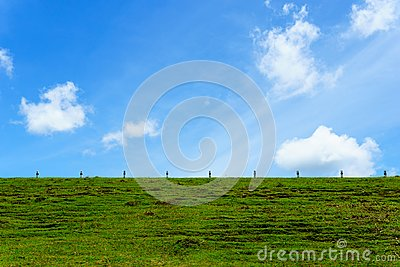 beautiful green grass on the earth wall of dam with blue sky with cloud for background or wallpaper