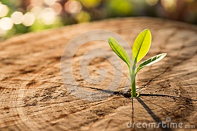 New Life concept with seedling growing sprout tree.