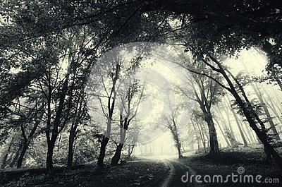 Road through forest with fog. Mysterious dark haunted Halloween scene