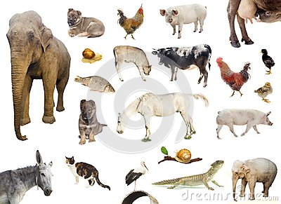 stock image of set of farm and wild animals