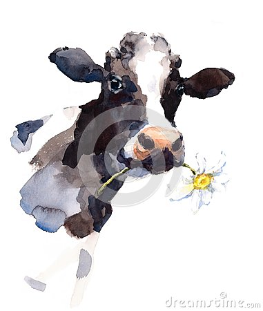 Cow Watercolor Farm Animal Illustration Hand Painted