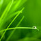 Water Drop on Grass Blade with Sparkle