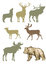 Set of forest animals