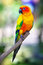 Colorful sun bird sitting on a branch