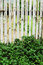 Bamboo fence - green tree.