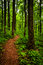 Trail through tall trees in a lush forest, Shenandoah National Park