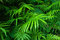 Ferns leaves green foliage tropical background. Rain forest