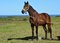 Race horse on pasture