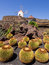 Cactus Garden in Lanzarote, Canary Islands.