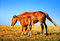 Horse Mare with Foal mother and baby Farm Animal on field