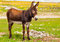 Donkey Farm Animal brown color standing on field grass