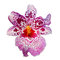 Isolated Purple Orchid Flower
