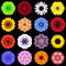 Big Collection of Various Colorful Pattern Flowers Isolated on Black