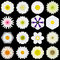 Big Collection of Various White Pattern Flowers Isolated on Black