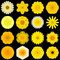 Big Collection of Various Yellow Pattern Flowers Isolated on Black