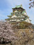 Osaka castle and cherry blossom