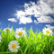 Flowers with grassy field on blue sky