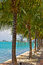 Row of palm trees along waterway in Miami Beach, Florida.