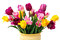 Bouquet of Yellow, Pink and Purple Tulips