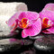 Spa setting of zen stones with drops, blooming twig