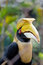 Hornbills in wire fence in thailand