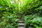 Trekking trail leading through jungle landscape of tropical forest