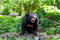 Asiatic Black Bear in the wild