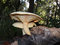 Large White Polypore Mushrooms Growing on a Stump