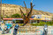 Famous tree, hippie bus and motorcycles  in Matala center