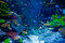 Aquarium with colorful tropical fish and beautiful corals