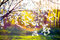 Blooming tree flowers and lens flare