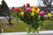 Yellow, red and purple tulips in a vase