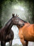 Two  beautiful warm-blood dressage horses scratching each over big tree nature background