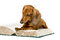Dog Read Book, Animal School Education, Reading on White
