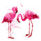 Vector watercolor pink flamingo couple in splashes