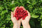 Human hands holding a wild raspberries in shape of heart