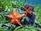 Starfish underwater over colorful marine life