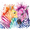 Funny zebra T-shirt graphics, rainbow zebra illustration