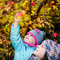 Autumn girl picking apple from tree