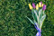 Bunch of purple and yellow tulip lying on green grass, top view