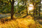 Sunset In Forest Trees. Natural sunlight sunshine in woods. Very