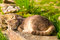 Cat sleeping peacefully on a stone