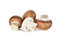 Uncooked Swiss champignon brown mushroom on white