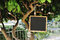 Blackboard, lantern and heart shaped decorations on a tree for wedding party