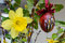 Easter decoration - vernal flowers