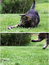 A cat is afraid of a mouse